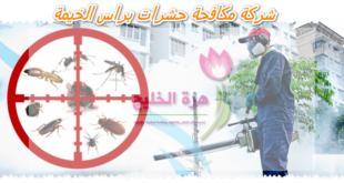 شركة مكافحة حشرات براس الخيمة