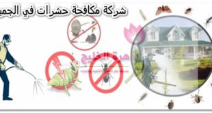 شركة مكافحة حشرات في الجميرا